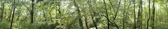 Leafy forest photo
